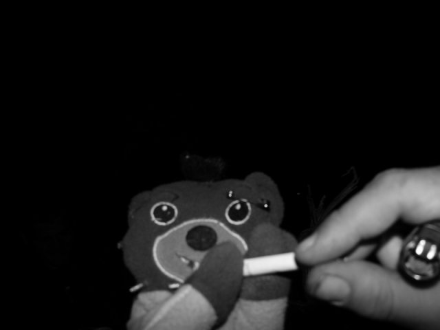Petit ours brun fume